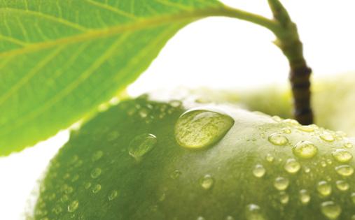 green-apple-aroma.jpg
